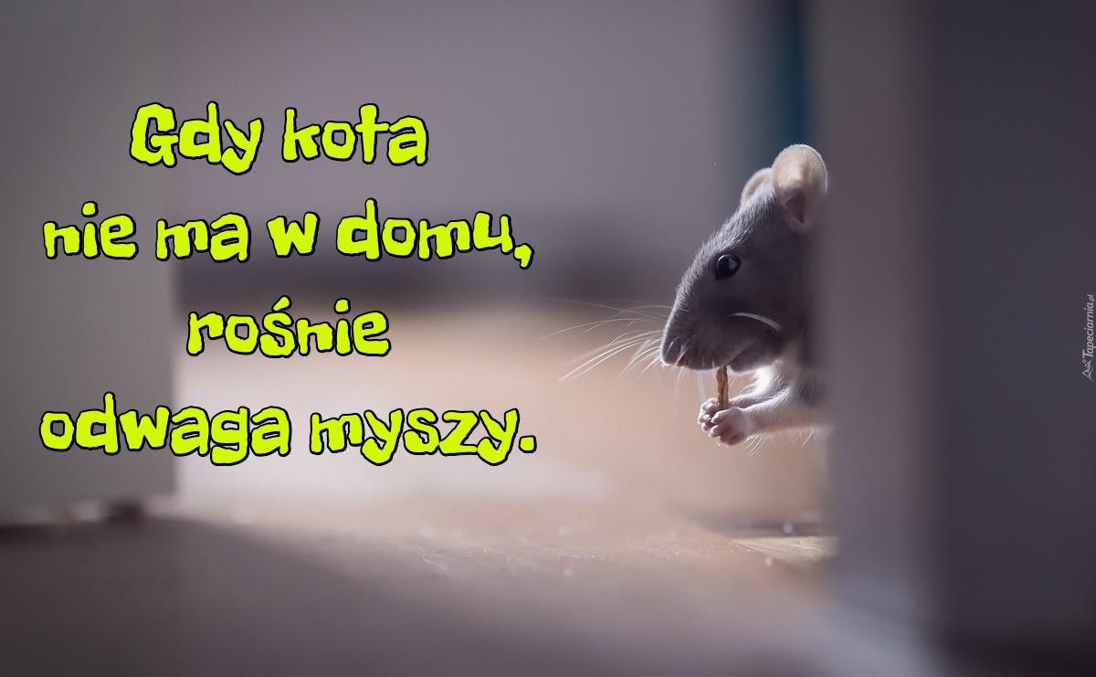 Gdy Kota Nie Ma W Domu Rośnie Odwaga Myszy