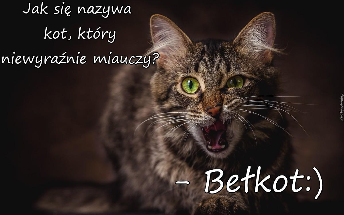 Kot Który Niewyraźnie Miauczy