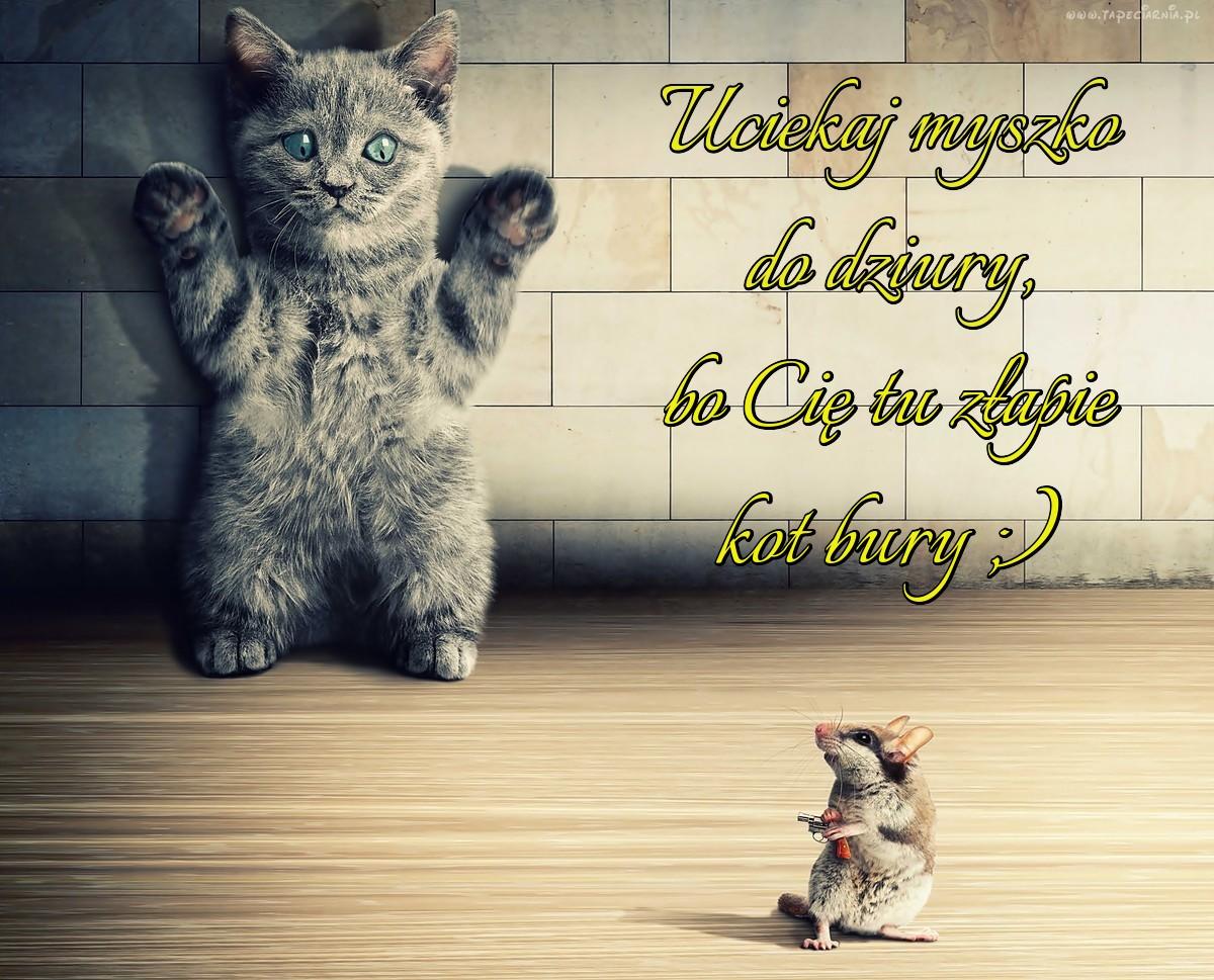 Uciekaj Myszko Do Dziury Bo Cię Tu Złapie Kot Bury