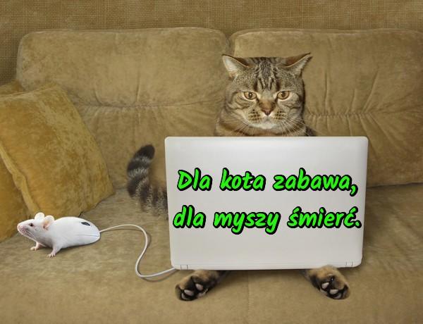 Kot I Mysz Memy